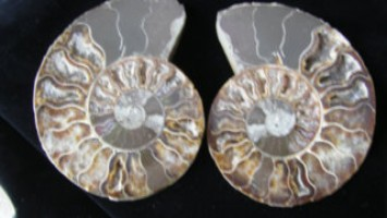 Ammonite Pair - Polished - Madagascar