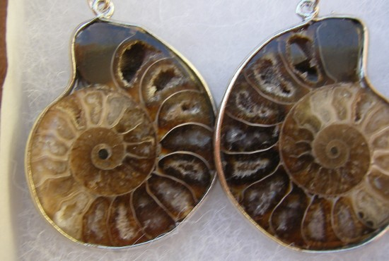 Ammonite Jewelry - Earrings - Madagascar