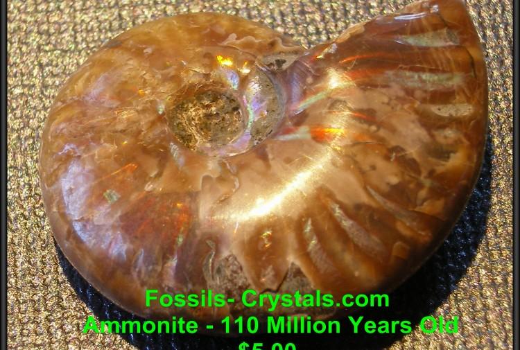 Iridescent Ammonite - Madagascar - 110 Million Years Old - For Sale
